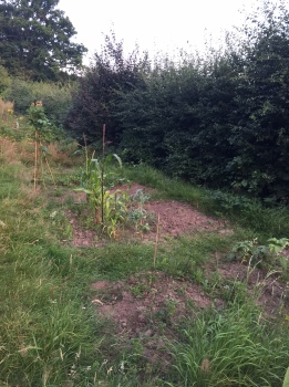 allotment anniversary